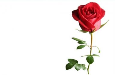 A Rosa de Paracelso SEM MOLD