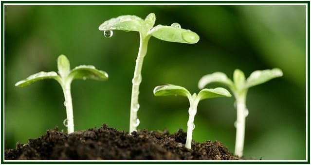 raja-ioga-na-parabola-do-semeador