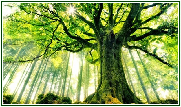 The Trees of the World